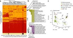 Strain-level microbial epidemiology and population genomics from shotgun metagenomics Nature Research, Next Generation Sequencing, Functional Analysis, Genome Sequencing, Article Search, Career Development, Shotgun, Thing 1 Thing 2