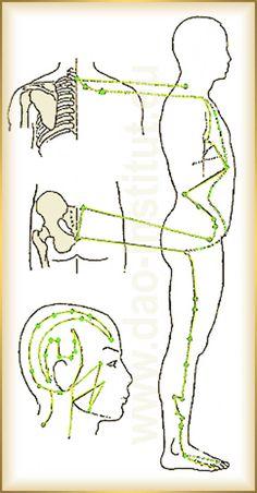 Dráha žlčníka - priebeh, funkcie a poruchy Chinese Medicine, Creative Words, At Home Workouts, Advice, Fitness, Medicine, Epilepsy, Tips, Home Workouts