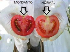 Smart Health Talk Warning:  Know where you food comes from.  We can't act like food that has been genetically engineered is not different.  The difference is visible and clear...Is anything more needed to prove what you should opt for? It's your life, your health, your family and your wish. Say NO to GMO. Listen to top scientist for GMOs in TV interview. Go here and scroll down: http://www.smarthealthtalk.com/vermont-rep-kate-webb-on-gmo-bill.html Also find out about GMO labeling legislation...