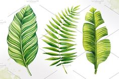 Tropical leaves. Watercolor vector. - Illustrations - 2