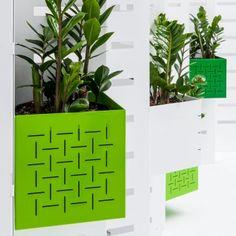 plant wall, garden wall