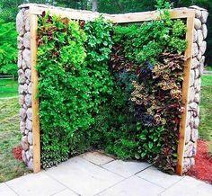 [06-17] HORTA VERTICAL EM PAREDES DE PEDRA >Esta ideia é tão simples quanto verticalmente colocadas duas camas grandes que já tinha a sua superfície coberta por vegetação.