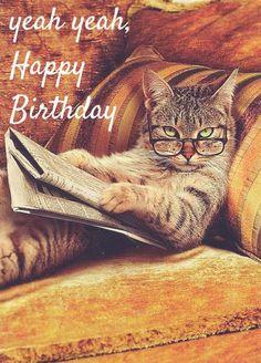 "101 Funny Cat Birthday Memes for the Feline Lovers in Your Life - 101 Funny Cat Birthday Memes – ""Yeah yeah, Happy Birthday. Cat Birthday Memes, Happy Birthday Boss, Happy Birthday Wishes Cards, Happy Birthday Quotes, Birthday Greetings, Funny Birthday, Cute Happy Birthday Images, Happy Birthday Funny Humorous, Husband Birthday"