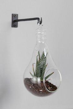 Hanging Light Bulb Glass Terrarium