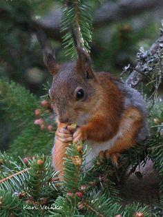Bud eater