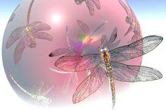 dragon fly