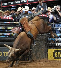 Mauney and Bushwacker Rodeo Cowboys, Real Cowboys, Cebu, Cattle Corrals, Cowboy Photography, Bucking Bulls, Rodeo Events, Professional Bull Riders, Rodeo Time