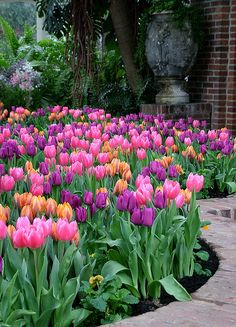 Beauty Tulips Arrangement for Home Garden 15 - Tulpen Tulips Garden, Garden Bulbs, Tulips Flowers, Daffodils, Spring Flowers, Beautiful Flowers, Purple Tulips, Cactus Flower, Exotic Flowers