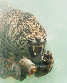 Majestic Animals, Animals Beautiful, Save Animals, Animals And Pets, Wildlife Photography, Animal Photography, Underwater Photography, Regard Animal, Cute Funny Animals