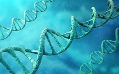 Humans who have had their DNA genetically modified could exist within two years after a private biotech company announced plans to start the first trials into a ground-breaking new technique.