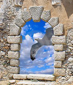 A seagull flying through an old Venetian window on Kythera island, Greece