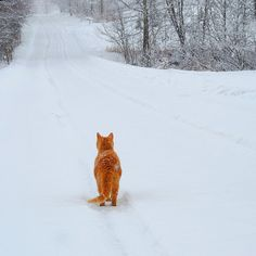 snowy. lonely. road.