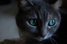 wowoww such a pretty kitty