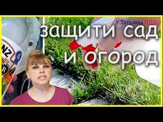(92) ЗАЩИТИ свой САД и ОГОРОД от вредителей и болезней тем, что под рукой... - YouTube