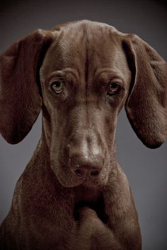 Beautiful dog!!