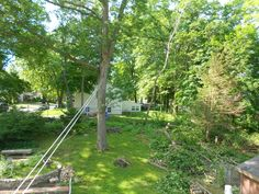My largest oak tree provides a support for the dog run and my clothesline from the second-floor deck. The next 3 trees slated for removal can be seen in the background.