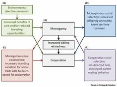 Alternative explanations for the evolution of monogamy and sibling cooperation