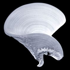 """Najia Mehadji Danse Mystique 1, 2011 tirage numérique pigmentaire, 160 x 160 cm édition à 5 exemplaires """""""