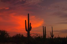 AZ-16 Saguaro National Park at Sunset