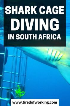 Shark Diving in Cape Town South Africa - Tired of Working Perfect Image, Perfect Photo, Love Photos, Cool Pictures, Shark Cage, Tired Of Work, Shark Diving, Cape Town South Africa, Third