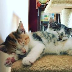 Adorable.  These are some adorable cats that  I need to show you!! I am a super cat lady!!