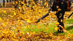Leaf blowers are a powerful way to get leaves out of your lawn, but they contribute to both air and noise pollution. Landscaping Tools, Noise Pollution, Lawn Sprinklers, Concrete Driveways, Free Plants, Annual Plants, Plant Nursery, Organic Farming, The Great Outdoors
