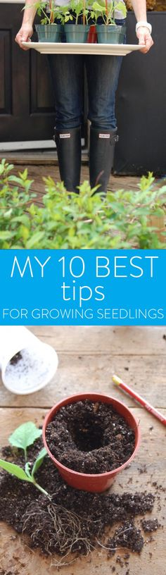 EVERY year. Every, single, year I am stunned that this works. Take a seed, stick it in some dirty, old, soil then watch it sprout into a plant within days. That seed may have been sitting around your house for … Continue reading →