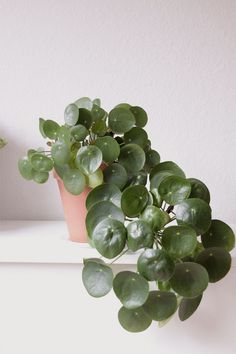 Summer Living: 12 Tips for Decorating Outdoors & Indoors - Pilea Peperomioides - Belle Fleur de Lis. Of ook pannekoekplant! The Best of home indoor in Hanging Plants, Potted Plants, Indoor Plants, Indoor Outdoor, Indoor Gardening, Chinese Money Plant, Cactus Plante, Deco Rose, Plants Are Friends