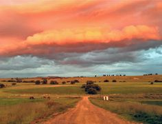 Free State sunset at the farm, South Africa African House, Free State, Out Of Africa, Africa Travel, Landscape Photography, Landscape Photos, Live, South Africa, Beautiful Places