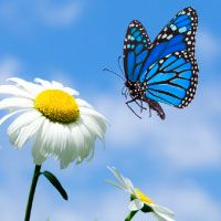 vlinder en bloem - Google zoeken