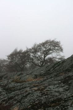stonetrees / Anne Kimiläinen
