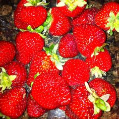 Strawberries from a strawberry farm found along Highway 1, California