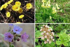 Jak sbírat první bylinky proti kašli