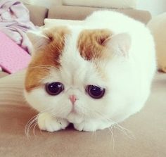 Sad cat is sad.