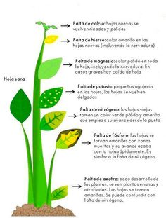 As folhas, os caules, os frutos, o aspecto da planta revela muito sobre sua…