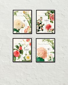 Spring Study Plate Set - Botanical Print Set - Printed on archival canvas - Makes a charming vintage display - Multiple Sizes - Free US Shipping – Belle Maison Art