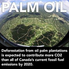 Palm Oil Deforestation #greeningyourcity #deforestation #danger #palmoil #co2emissions #unsustainable
