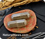 2000 yr.old Chinese herbal remedy could be used to treat autoimmune disorders