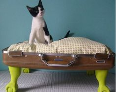 gatti e valigie.. | A Casa di Ro