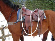 http://www.horsejournals.com/files/Walchuk%202.jpg