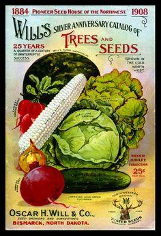 1908 Wills seed catalog.