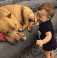 We as a society have a duty — we must stop this MADNESS! 26 Of The Most Dangerous Things Pit Bulls Did In 2015 Cute Funny Animals, Funny Cute, Funny Dogs, 9gag Funny, Top Funny, Love My Dog, Puppy Love, Cute Puppies, Cute Dogs