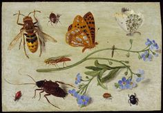 'Insects', Jan van Kessel the Elder