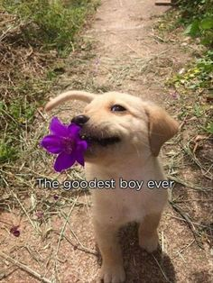 """The goodest boy ever! You know you just said that using a """"baby voice"""" in your head."""