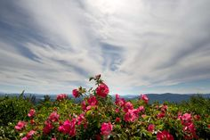 #clouds #flowers #mountains #nature #plant #sky