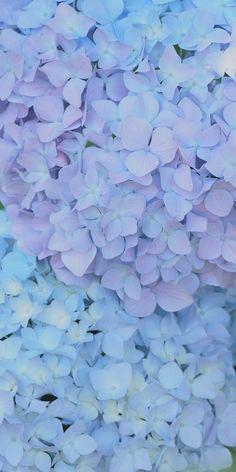 ☔️ #hydrangea #flower #pastel #beauty #followback #photooftheday #tagforlikes