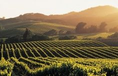 Vineyards - whether in France or Italy, I can't wait to see these in Europe