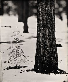 """Ian Ruhter/ Wet Plate Collodion /24"""" x30""""/ First snow/Lake Tahoe Ca, 11.13.2012"""