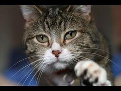 The Secret Life of the Cat (Full Documentary)