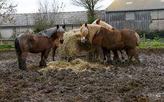 Paddocks, Mud & Runoff